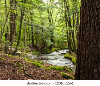 Idyllic countryside and nature landscape with river or stream.