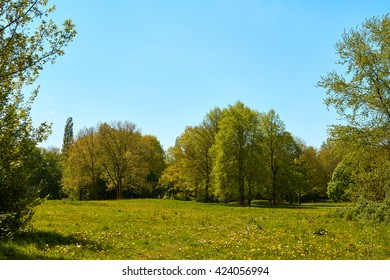Idyllic countryside overlooking a field of flowers and trees.
