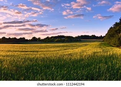 Idyllic Danish countryside