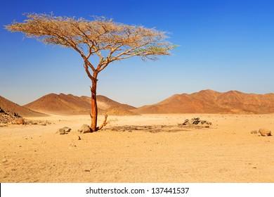Idyllic desert scenery with single tree, Egypt