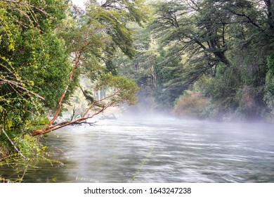 An idyllic and fantasy green scenery with the Caburgua river stream flowing inside an amazing rainforest full of trees during morning time with the morning mist giving us a moody atmosphere background