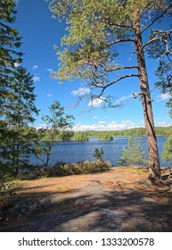 Idyllic Finnish summer lake scene at Teijo hiking trail in Salo, Finland. Big tree and the Matildajarvi lake on the background.