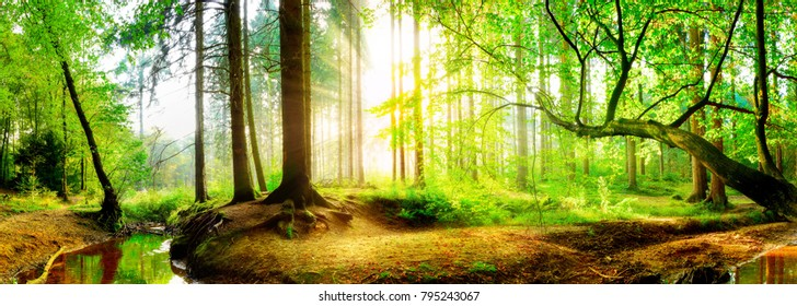 Idyllic forest with brook at sunrise