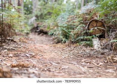 Idyllic Forest Hike