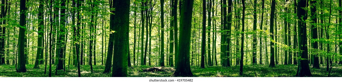 Idyllic forest in a springtime panorama landscape