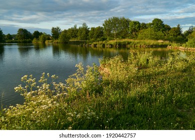 idyllic greenery at the shore of a fishing pond in Käseburg (city of Brake Unterweser, district Wesermarsch, Germany) with vivid sky in summer