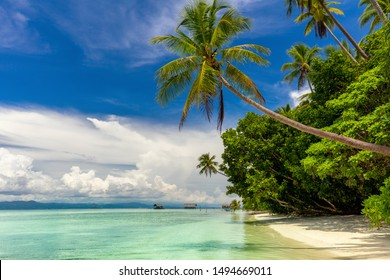 Idyllic Island -  landscape of tropical beach - calm ocean, palm trees, blue sky and nobody. Big size