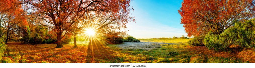 Idyllic landscape in autumn with forest and sun