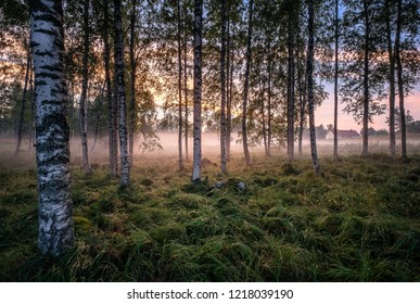 Idyllic landscape with birch forest and farm house at summer evening in Finland