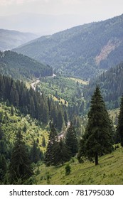 Idyllic landscape in the Carpathians with fresh green meadows and a blue sky with puffy clouds. Panoramic view