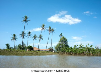 Idyllic landscape with Coconut Trees, Parnaiba River (Portuguese: Rio Parnaiba), the border between the states of Maranhao and Piaui, longest river entirely located within Brazil's Northeast Region
