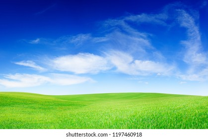Idyllic landscape, green field, blue sky and white clouds