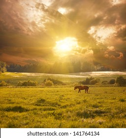 idyllic landscape with horse in sunlight