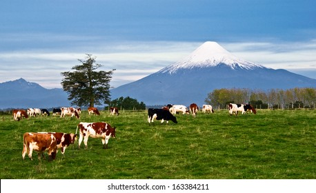 Idyllic landscape of Osorno Volcano, Lake Region, Chile