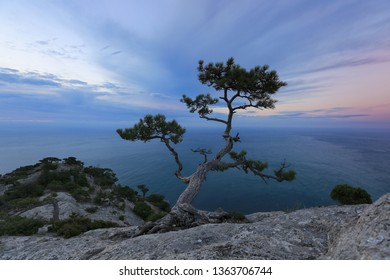 idyllic landscape with pine growing on a cliff against the sea on the sunset