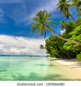 Idyllic landscape of tropical island -  warm ocean water, palm trees, blue sky with white clouds and nobody