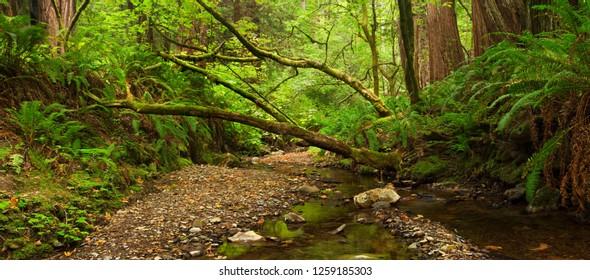Idyllic Mountain Creek in Lush Green Rain Forest