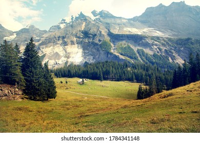 Idyllic mountain landscape in the Alps with blooming meadows in springtime. Mountains of the alps in Switerland - Shutterstock ID 1784341148