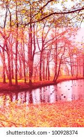 Idyllic Nature Autumn Leaves