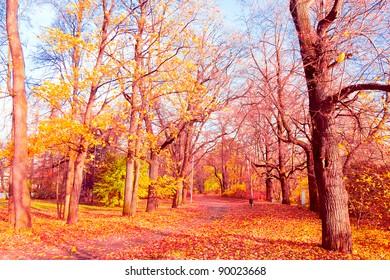 Idyllic Nature Nostalgic Scene