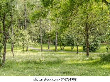 idyllic park scenery with trees and grass at summer time
