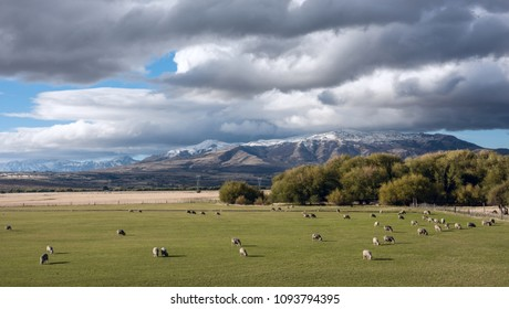 Idyllic Patagonian landscape with lambs. Trevelin-Esquel in the northwest of Chubut Province in Argentine Patagonia