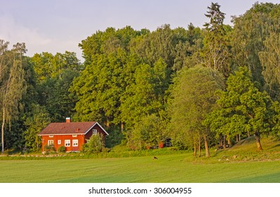 Idyllic red house by the field with grazing deer