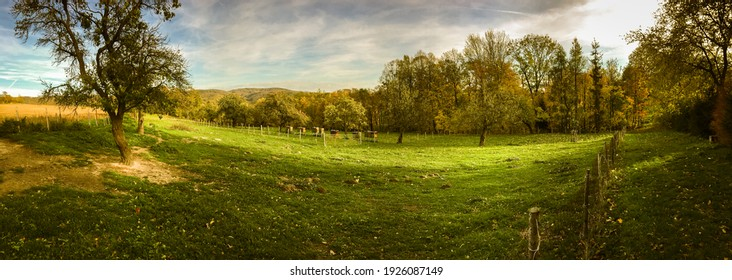 Idyllic rural scenery with lush green pastures, beehives, old fruit trees and enclosure for sheep