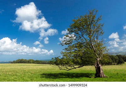 Idyllic rural scenery with tree, green meadow and deep blue sky.