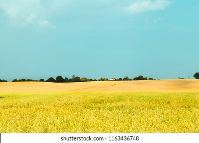 Idyllic rural vibrant view of farmland hill and ripening cereal crops and beauty of Essex landscape - UK