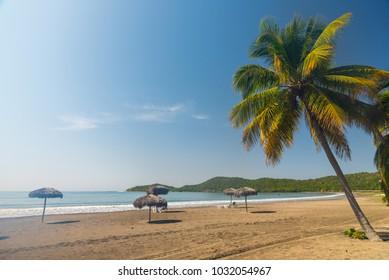 Idyllic sand beach on Caribbean Sea. Palm trees against blue sky. Cuba