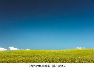 Idyllic scene of crop in field