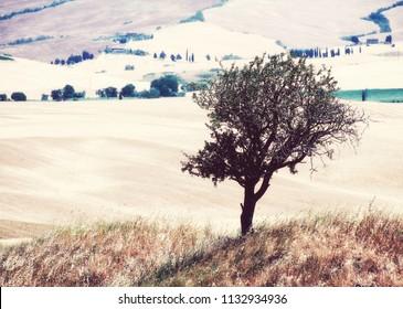 idyllic scene in Tuscany, Italy