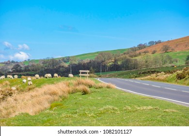 Idyllic scenery of british countryside in spring.Dry grass on field,hills and trees in background,good weather, blue sky with few clouds,tranquility of rural living.Wales landscape in springtime.Lambs