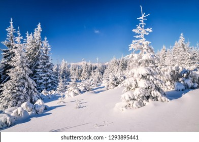 Idyllic snowy winter in forest in the mountains of Slovakia on sunny winter day