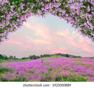 Idyllic spring background with blossoming lilac bushes flowers and pink wildflowers on meadow. Pink morning clouds on blue sky over delicate flowering spring meadow, space for text