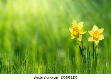 idyllic springtime meadow on abstract background
