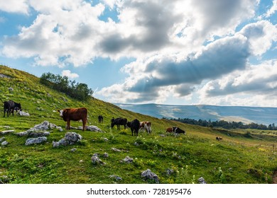 Idyllic summer landscape in alps with cows grazing on green mountain pastures