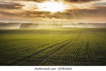 Idyllic sunrise over foggy autumn green fields