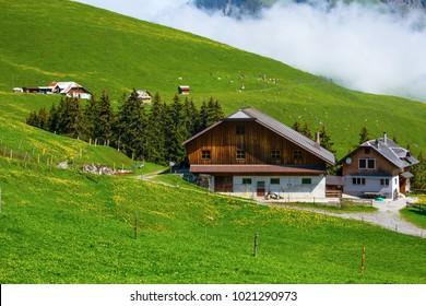 Idyllic switzerland alpine meadows