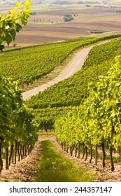 An idyllic wineyard in Germany