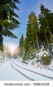 Idyllic winter. Landscape with road through the pine forest, sun and winter sky. Snows cape.