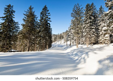 Idyllic winter landscape of a snow-covered forest