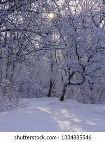Idyllic winter scene in the woods with the sun shining through the trees onto the snow covered ground