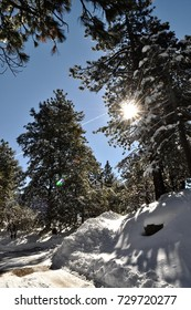 Idyllwild on a sunny day in the winter