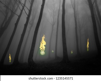 Ignes fatui (or will-o'-the-wisp). Flickering phosphorescent light seen at night chiefly over marshy ground and believed to be due to spontaneous combustion of gas from decomposed organic matter.