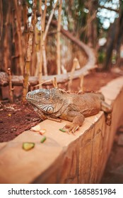 iguana on the side of a planter