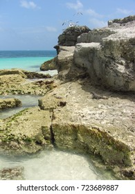 Iguana taking the sun on the rocky beach of Cancun, Mexico with a flight of seagulls