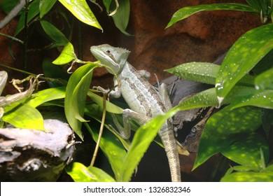 iguana in a terrarium