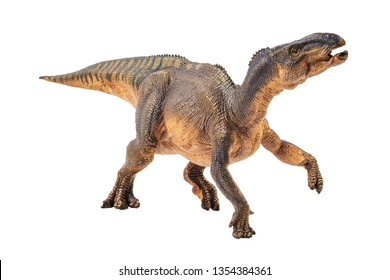 Iguanodon , Dinosaur on white background .